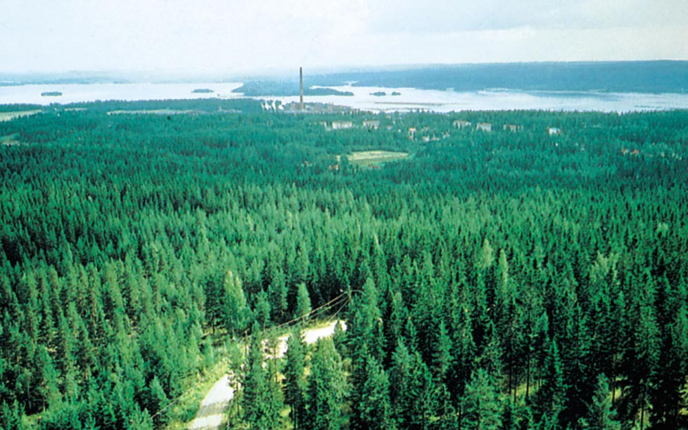 plants in the coniferous forest Endangered plants in coniferous forests coniferous forests have many endangered plants some of the plants are being protected, but many have lost the fight due to pollution, logging and cultivation of the land.